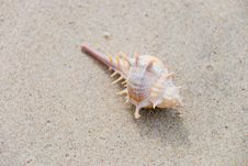 Free Shellfish On Sand Royalty Free Stock Photos - 18505858