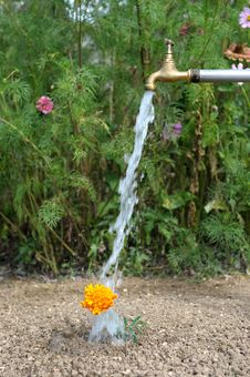 Free Watering Flower Three Stock Photography - 18506162