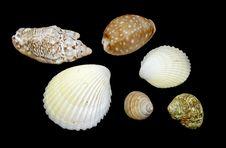 Free Shells On Black Background Stock Photo - 18506270