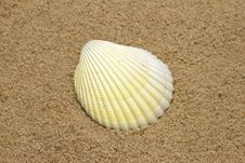 Free Single Sea Shell On Sandy Beach Royalty Free Stock Photography - 18506367
