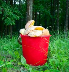 Bucket Of Mushrooms Stock Photography