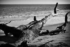 Free Trunk On Beach Stock Photos - 18506603