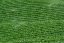 Tea Plantation, Nature, Plant, Leaf, Sprinklers Royalty Free Stock Images
