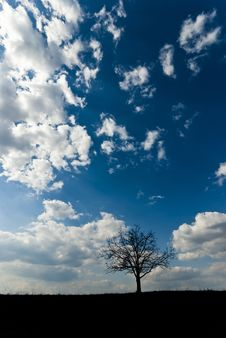 Free Lone Tree Silhouette Stock Image - 18508221