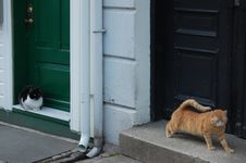 Free Cats Outside Doors Royalty Free Stock Image - 18508476