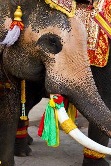 Free Elephant Close Up Royalty Free Stock Image - 18509206