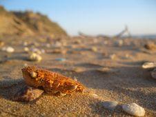 Free Crab Skull In Beach Stock Image - 18510471