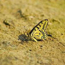 Free Exotic Butterfly Stock Photo - 18513210