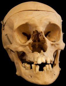 Free Skull On Black Backround Stock Image - 18513591