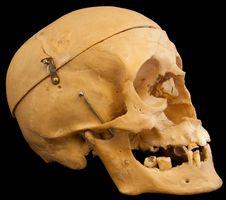 Free Skull On Black Backround Stock Photos - 18513603