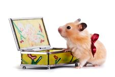 Free Hamster, Gift Stock Photo - 18517220