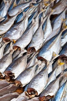 Free Dried Fish Stock Images - 18519554