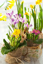Free Colorful Spring Flowers Stock Image - 18523231