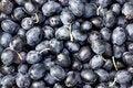 Free Black Olives  Background. Royalty Free Stock Image - 18524876