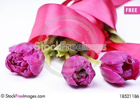 Violet tulips Stock Photo