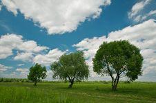 Free Trees Stock Photos - 18520953