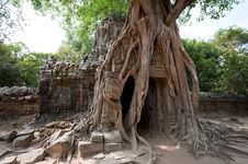 Free Roots Of Angkor Stock Photo - 18521880