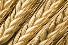 Free Background Of Ripe Wheat Ears Royalty Free Stock Photo - 18522595