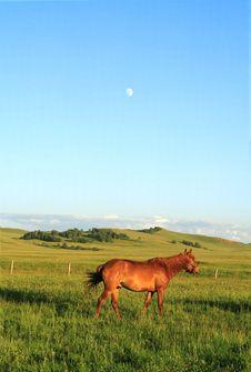 Free Horses Royalty Free Stock Image - 18522936