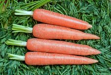 Free Fresh Ripe Raw Carrot Royalty Free Stock Images - 18523389