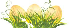 Free Easter Eggs In The Grass With Chamomile Stock Photo - 18523670