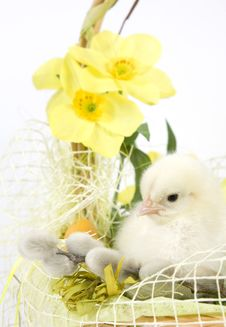 Free The Easter Basket Royalty Free Stock Images - 18523829