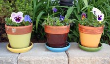 Free Spring Flowers In Pots Royalty Free Stock Image - 18524486