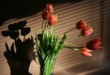 Free Spring Flowers Red Tulips In Vase Stock Image - 18524511