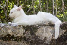 Free White Cat On Stone Wall Stock Photos - 18525623