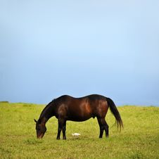 Free Horse And Duck Eating Grass Royalty Free Stock Photo - 18527475