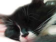 Free Sleeping Cat Royalty Free Stock Image - 18529686