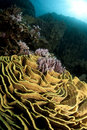 Free Pristine Coral Reef In The Red Sea Royalty Free Stock Photos - 18534738