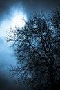 Free Scary Tree Royalty Free Stock Photo - 18536175