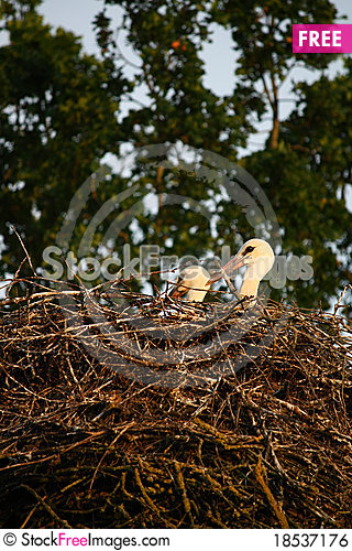 Nest of storks Stock Photo