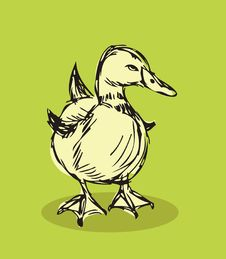 Free Duck Vector Isolated Royalty Free Stock Image - 18530286