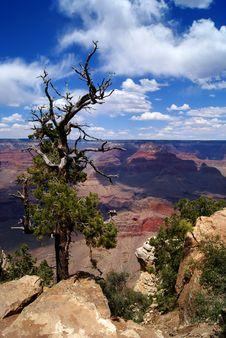 Free Grand Canyon Royalty Free Stock Photo - 18531565
