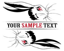 Free Bunny Rabbit Face Royalty Free Stock Image - 18532706