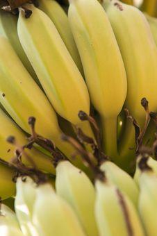 Free Bananas Royalty Free Stock Images - 18533619