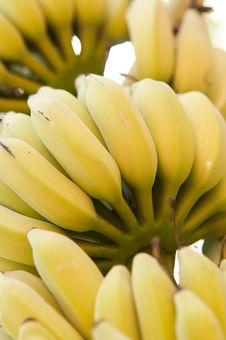 Free Bananas Royalty Free Stock Photography - 18533767