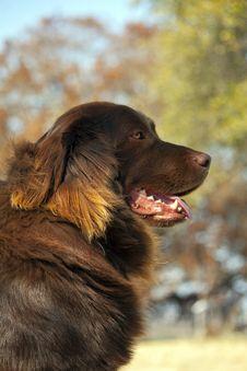 Free Dog Guarding His Yard Royalty Free Stock Photo - 18534305