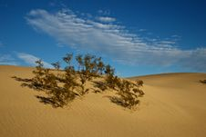 Free Life On The Dunes Royalty Free Stock Photos - 18534708