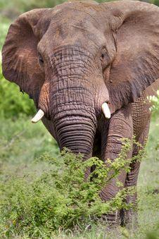 Free Elephant Stock Photos - 18535263
