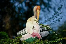 Free Painted Stork Stock Image - 18536051