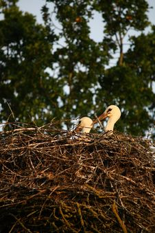 Free Nest Of Storks Royalty Free Stock Image - 18537176
