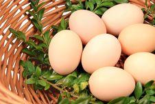 Free Eggs Stock Image - 18538521