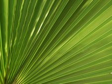 Free Palm Background Royalty Free Stock Photos - 18538818