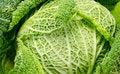 Free Savoy Cabbage Stock Photos - 18542803
