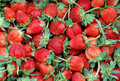 Free Fresh Strawberry Royalty Free Stock Images - 18543099