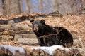 Free Spring Time Bear Stock Photos - 18546963
