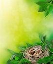 Free Spring Stock Image - 18548531